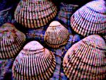 Shells Red Seen Thru a Glass Darkly by KittenDiotima