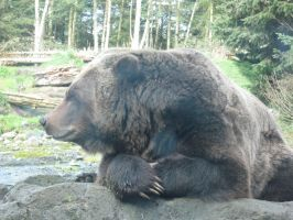 Bear at the Seattle Zoo by TSofian
