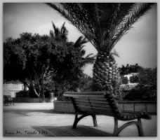 Palm and bench by quevedo3