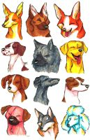 Brush Breeds Compilation Batch 2 by Stray-Sketches