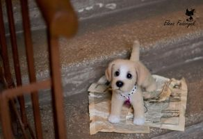 The foundling puppy by KittenBlackUA