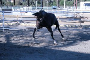 black horse stock 11 by xbr0kendevotion