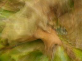 Moving Leaves 1 by FiLH