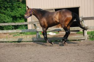 QH 12 by Spotstock