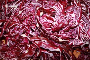 Red Cabbage by Civetta70