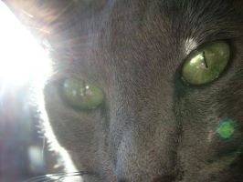 russian blue, again. by mssunflower