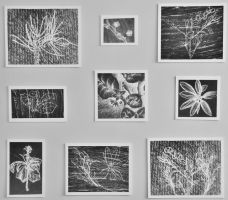 Photograms by Contrast-and-Colour