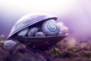 Snails Dreams by MohannadKassab