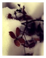 Flower in the snow by Skycode