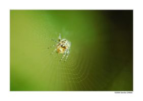 Little spider by grugster