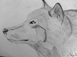 Wolf Sketch by The-Diesis