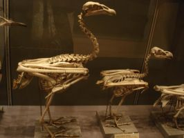 Bird skeleton-3 by Flyg-stock