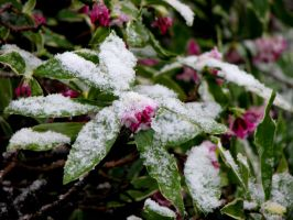 Spring Snow 1 by Casperium