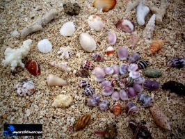 --- shells collection ---- by marzbluerose