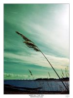 REED BY THE SEA by Photowoman