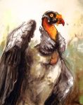 King Vulture Sketch by Caustic-Substrate
