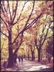 Autumn by Imperfection22
