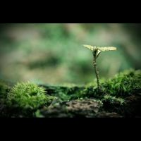 Piece of Nature by cloks