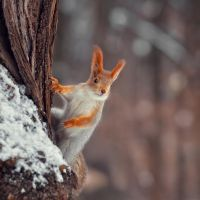 climber by fly10