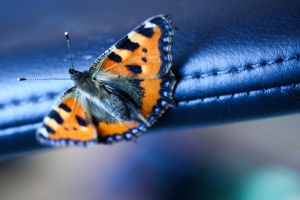 butterfly 2 by amyhooton