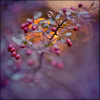 to take you there by detail24
