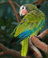 Cuban Amazon by mydigitalmind