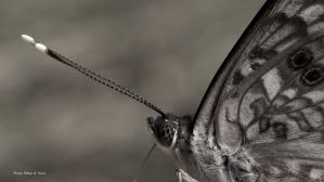 Friendly Little Moth by abstractcamera