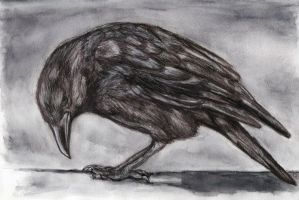 Crow by DSiwek