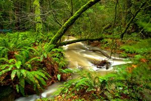Muir Woods Creek by gursesl