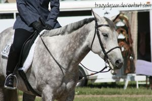 Quarter Horse Stock 67 by tragedyseen