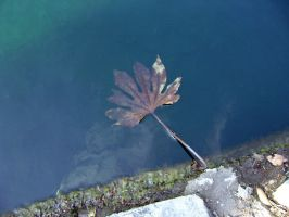 Drowning Leaf by AiSac