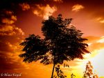 sunset. by Drfayed
