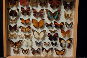 Butterflies : 14 by taeliac-stock