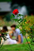 Love amidst the roses by justjake54