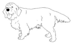 Clumber Spaniel Lines by Wolfs-Hybrid