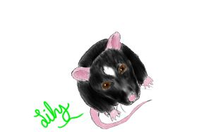 Lily the Rat by mrm911
