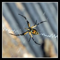 Spider in his web by sandwedge