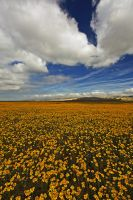 Carrizo Plains III by ernieleo