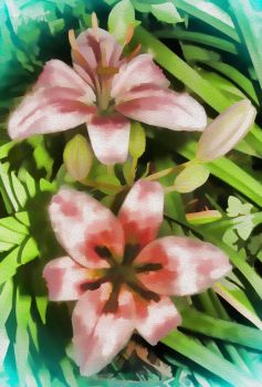 Pink lily oil by Old-Catdude