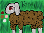 Pansy Update by Shipley-Dipley