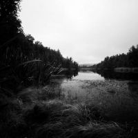 Lake Matheson III by DMcRae