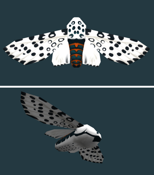 Giant Leopard Moth by life-take