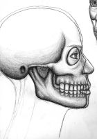 Anatomical study : fleshed 1 by northdrow