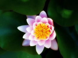 Water Lily by HopeAnDeloI