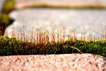 Moss thinks it's Spring by KeswickPinhead