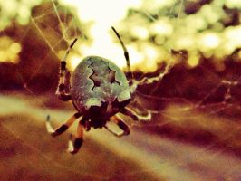 Spider And Web by TheGerm84