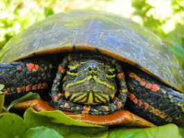 Turtle Trepidation by Anachronist84
