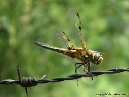 Dragonfly I by MementoX