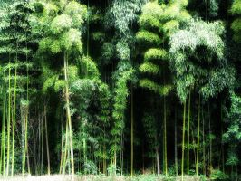 Japanese forest by altRid