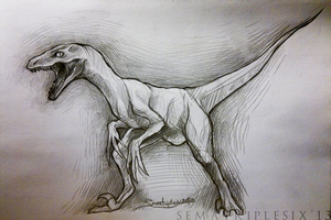 raptor by otoimai